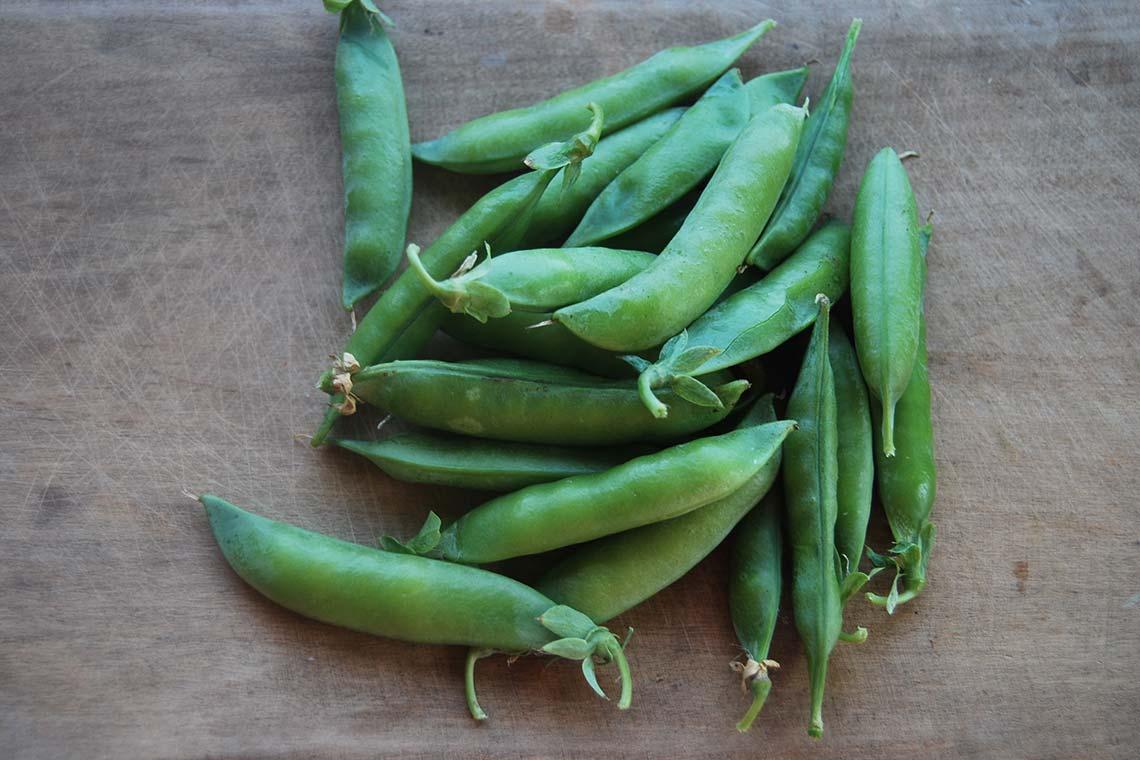 Горох сахарный Альфаеспелость и высокую урожайность. Зелёный горошек крупный, нежный и сладкий, с высоким содержанием витамина С и белка