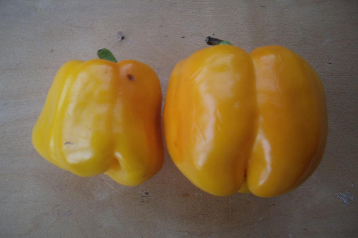 Перец сладкий жёлтый