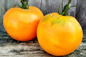 Томат Туапсинский апельсин
