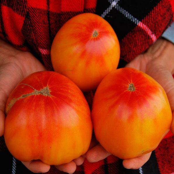 Попробуйте непревзойдённый тропический вкус двухцветных томатов