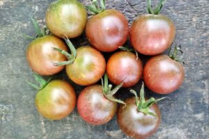 Томат Чёрная вишня (Black Cherry)