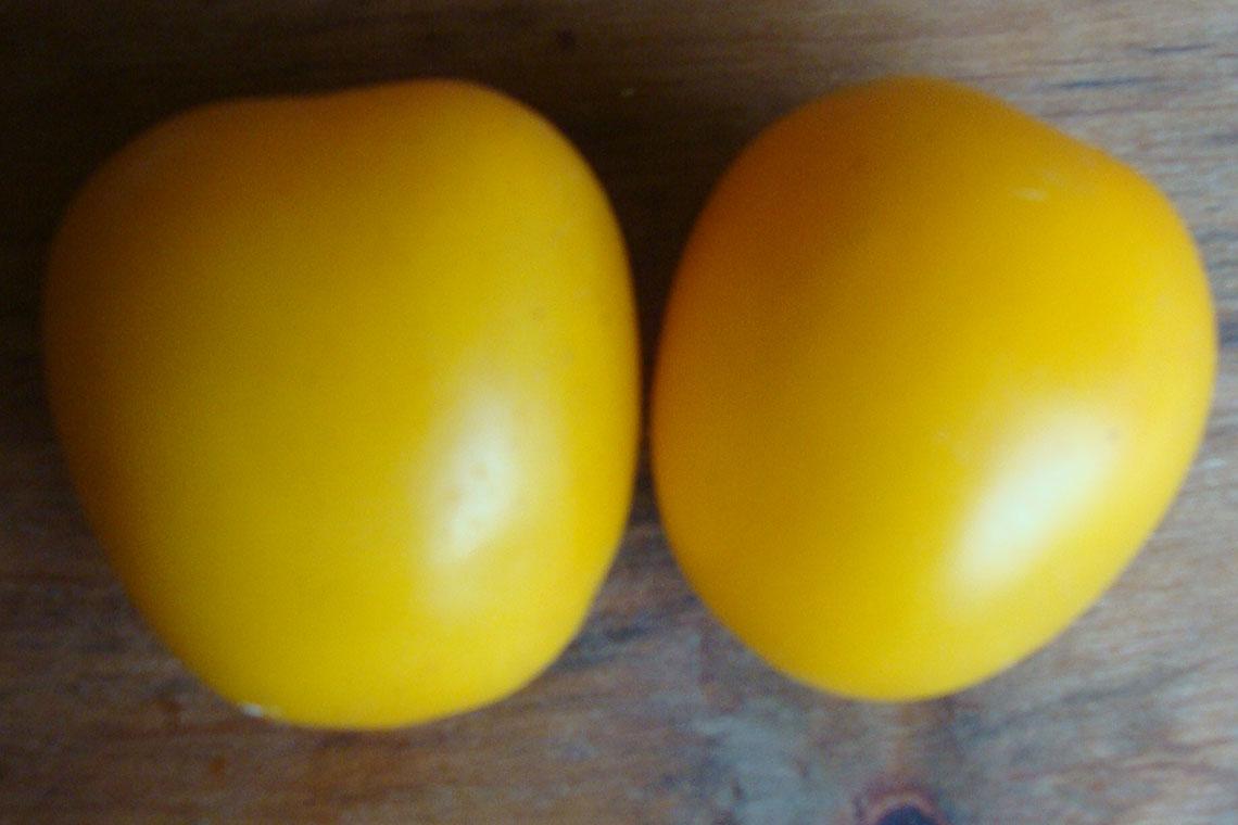 Томат Сливка-лимон