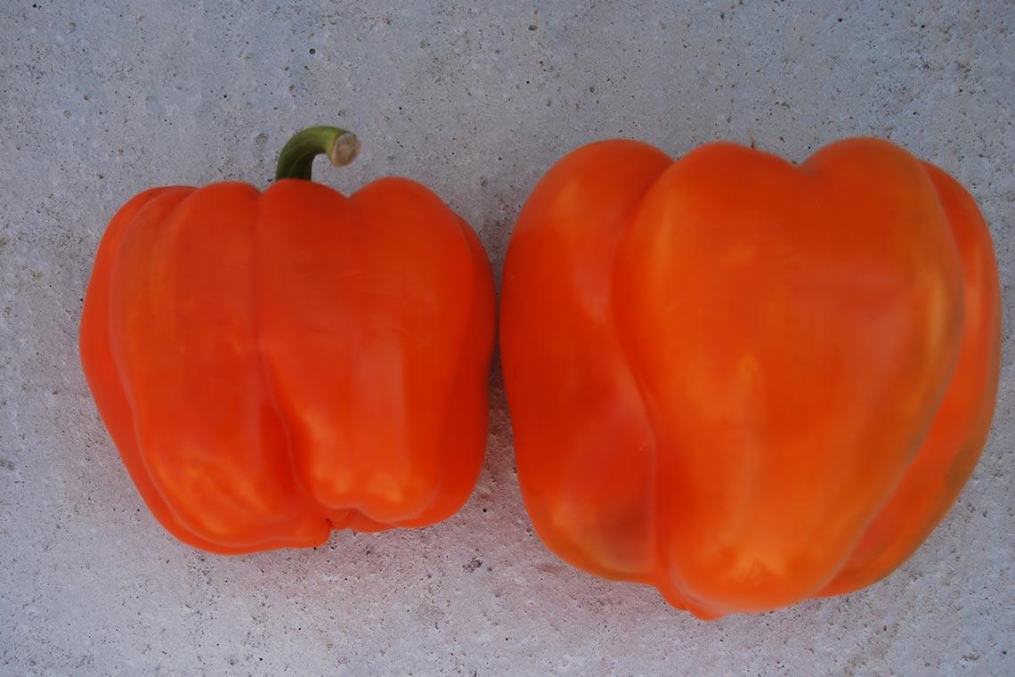 Перец сладкий «Оранжевый»