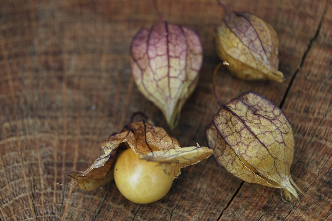 Физалис ягодный «Ананасный»