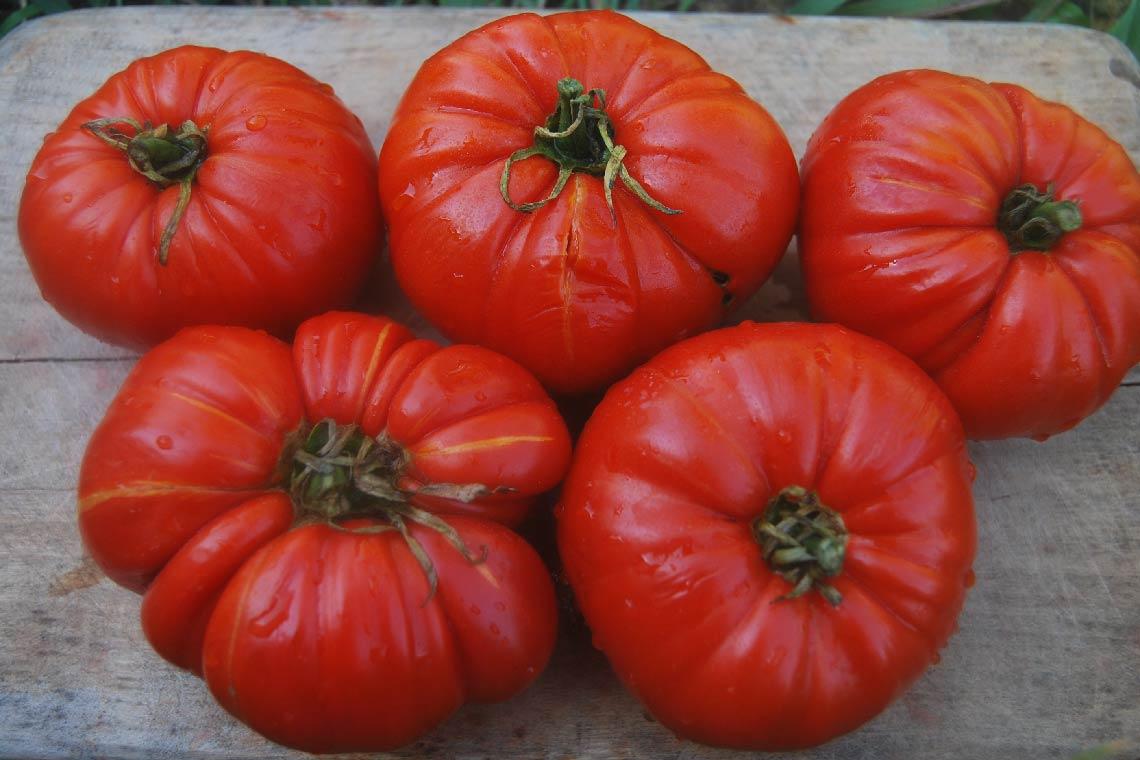 Коллекция редких сортов томатов