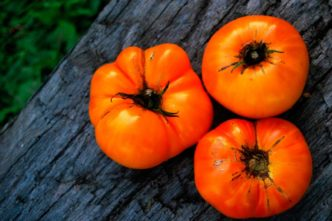 Томаты сорта Оранжевая прелесть