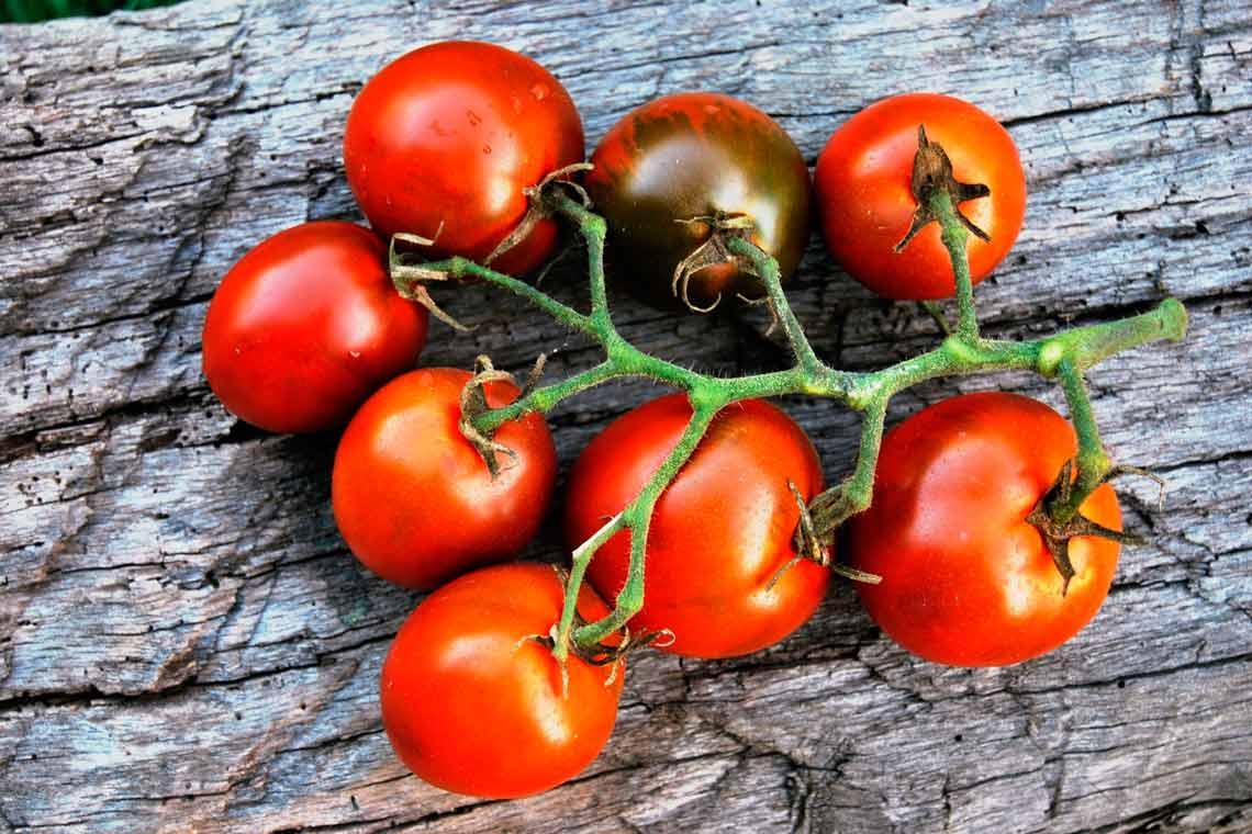 томат слива золотая отзывы фото