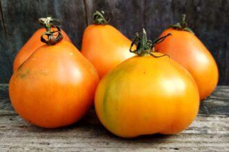 Томат Оранжевый трюфель