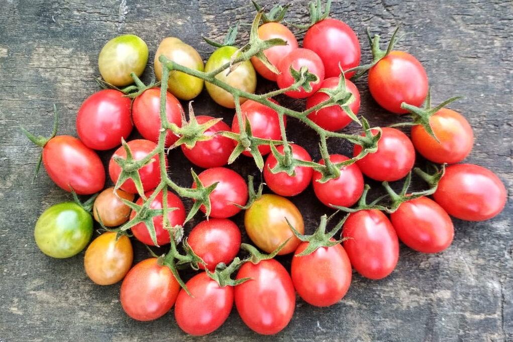 интересно знать томаты черри лучшие сорта фото центре