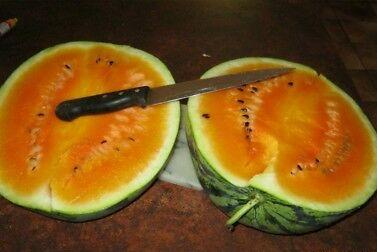 Арбуз Оранжевый – Необыкновенный сорт арбуза