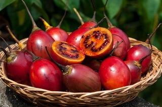 Тамарилло, томатное дерево