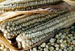 Кукуруза зубовидная Хикори кинг
