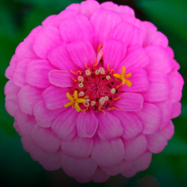 Добро пожаловать в мир красоты. Цветы на любой вкус