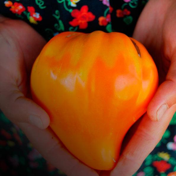 Томат Оранжевая ягода. Изумительный вкус