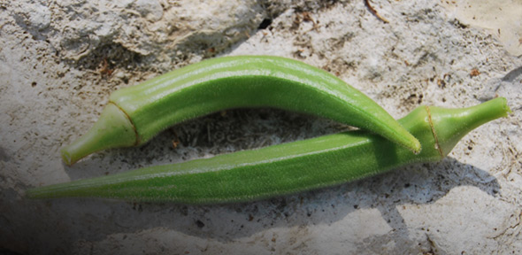 Бамия - экзотический овощ